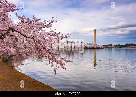 Washington DC, USA au bassin de marée avec le Washington Monument dans la saison du printemps.