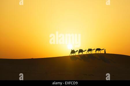 Caravane de chameaux dans le désert au coucher du soleil, Dubaï, Émirats Arabes Unis Banque D'Images