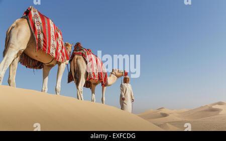 Des bédouins deux chameaux dans le désert, Dubaï, Émirats Arabes Unis Banque D'Images
