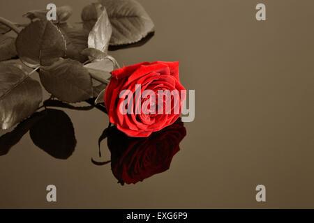 Rose Banque D'Images