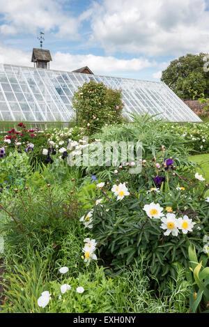 Au début de l'été, y compris les fleurs de pivoines et d'Iris de frontières à Arley Hall gardens dans le Cheshire, Banque D'Images