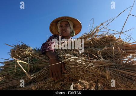 Femme de la tribu de l'action avec un paquet de paille de riz, près de Heho, l'État de Shan, Myanmar Banque D'Images