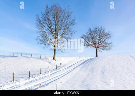 Chemin de champ et arbres dans la neige, Hoegl, Berchtesgadener Land, Bavière, Allemagne, Europe Banque D'Images