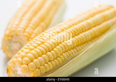 Épis de maïs Banque D'Images