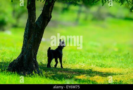Peu d'agneau nouveau-né au printemps, près d'un arbre Banque D'Images