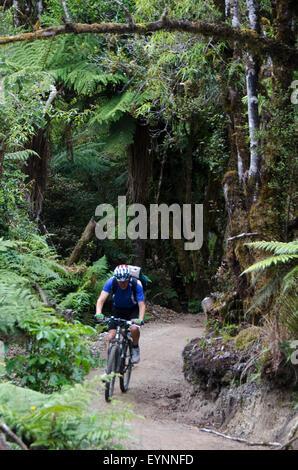 Randonnée à vélo sur le sentier du Bois, le Parc Forestier de Pureora, près de Taupo, île du Nord, Nouvelle-Zélande Banque D'Images