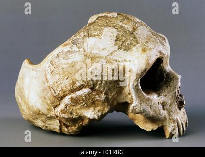 Modèle de crâne de Néandertal (Homo Sapiens neanderthalensis), Gibraltar, Royaume-Uni.
