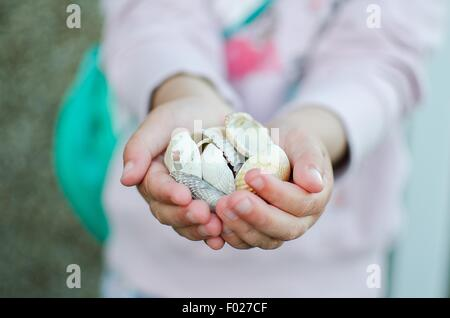 Little girl holding coquillages dans ses mains Banque D'Images