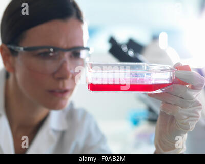 Biologiste des cellules femelles holding ballon contenant les cellules souches, cultivé en milieu de croissance Banque D'Images