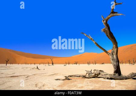 Les Morts Viei (DeadVlei) Pan, Namib-Naukluft National Park, Sossusviei, Désert du Namib, Région Hardap, République Banque D'Images