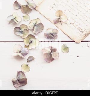 Ils ont perdu de gros plan fleurs hortensias avec vintage lettre à l'arrière-plan Banque D'Images
