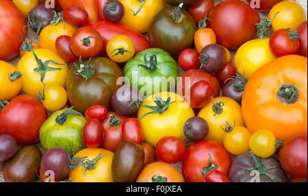 Solanum lycopersicum. Variétés de tomates Heirloom Banque D'Images