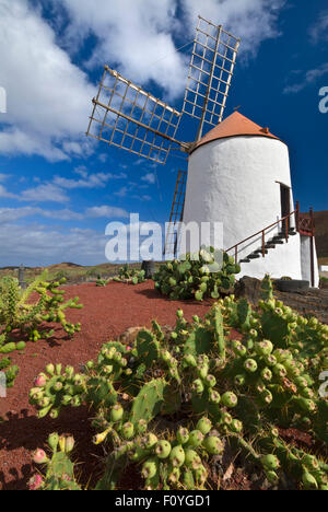 Jardin de cactus, jardin de cactus à Guatiza, moulin à Lanzarote Iles Canaries Espagne Banque D'Images
