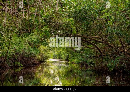 La Caroni Swamp est une espèce désignée sanctuaire situé à l'embouchure de la rivière Caroni, le plus grand fleuve Banque D'Images