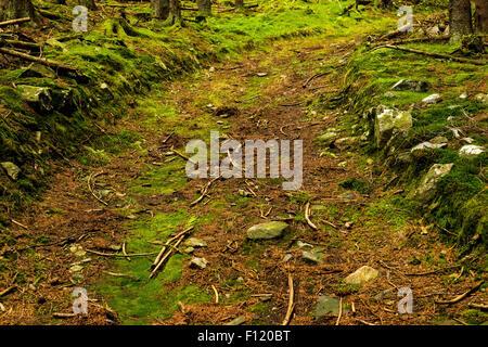 Route de terre qui traverse une forêt Banque D'Images