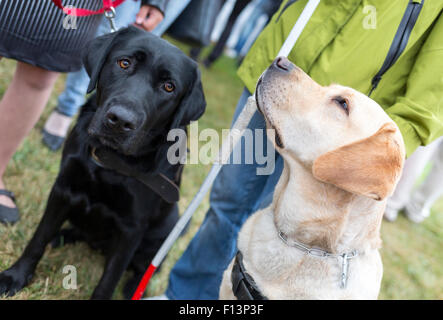 Les personnes aveugles et les chiens d'au cours de la dernière formation pour les animaux. Les chiens sont en cours Banque D'Images