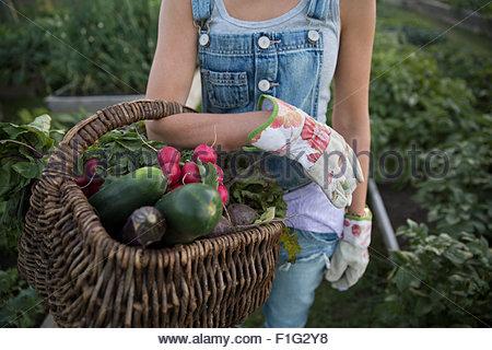 Close up woman holding fresh panier de légumes récoltés Banque D'Images