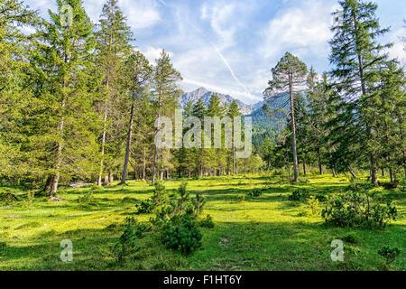 Droit du paysage avec des arbres et des alpes près de l'Isar et Karwendel en Bavière, Allemagne Banque D'Images