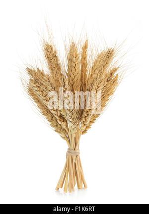 Les épis de blé isolé sur fond blanc Banque D'Images