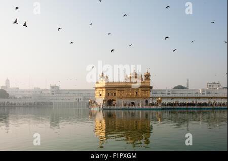 Amritsar, Punjab, en Inde. Le Temple d'Or - Harmandir Sahib - à l'aube avec des pigeons, l'Amrit Sarovar extérieure. Banque D'Images