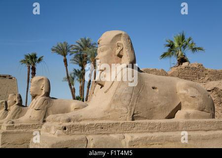 Avenue de sphinx, le temple de Louxor, Louxor, Thèbes, Site du patrimoine mondial de l'UNESCO, l'Égypte, l'Afrique Banque D'Images