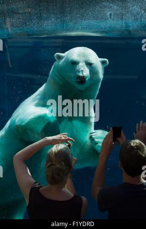 Canada,Quebec,Aquarium,Tourisme,l'ours polaire Banque D'Images