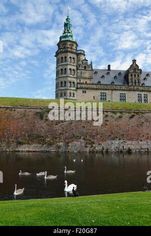 Cygnes, cygnes et cormorans dans les douves et le château de Kronborg à Helsingør / Elsinore, Royal North Sealand, Danemark.