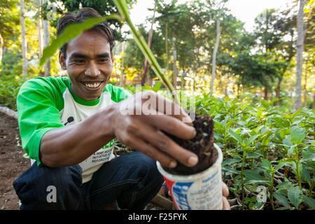 L'Indonésie, îles de la sonde, Lombok, le WWF Nouveau Projet Trees, villageois, en prenant soin des arbres de la Banque D'Images