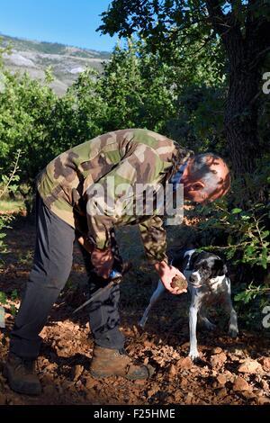 La France, Var, Bauduen, recherche de truffes dans le domaine du Hameau des Clos, la truffe producteur Marcel Demaria Banque D'Images