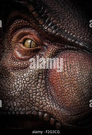 Tyrannosaurus Rex Banque D'Images