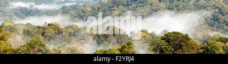Panorama de la forêt tropicale avec brouillard passant de la forêt après la pluie. Dans l'Amazonie équatorienne. Banque D'Images