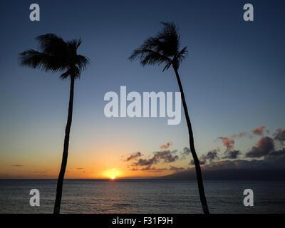 Le soleil se couche de nuages au-dessus de l'océan entre les palmiers. Banque D'Images