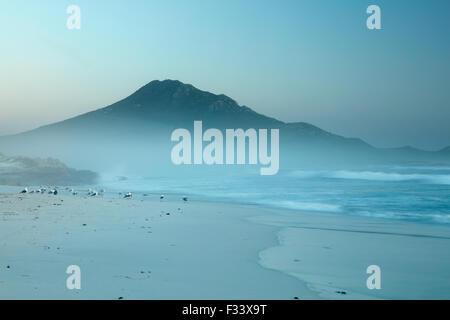 Les cormorans et les goélands sur Platboom Beach et le Cap de Bonne Espérance, Le Cap, Afrique du Sud Banque D'Images