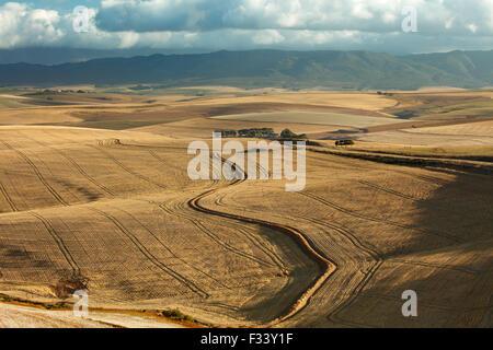 Terres agricoles vallonnées dans la région d'Overberg près de Villiersdorp, Western Cape, Afrique du Sud Banque D'Images