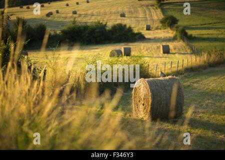 Bottes de foin dans les champs près de Beaumont du Périgord, Pays de Bergerac, Dordogne, Aquitaine, France Banque D'Images