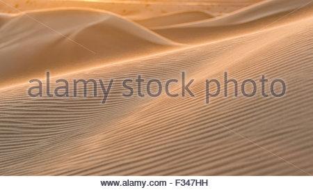 Soleil du soir lumineux capture les spindrift de dunes de sable de Algodones Dunes en Californie Banque D'Images