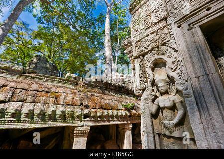 Bas-relief dans Ta Prohm temple. Parc archéologique d'Angkor, la Province de Siem Reap, au Cambodge. Banque D'Images