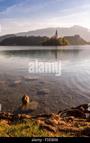 Petite île avec l'Église catholique dans le lac de Bled, en Slovénie, au lever du soleil avec le château, les canards Banque D'Images