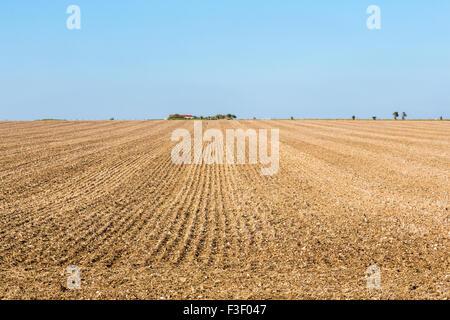 Champ labouré, les terres agricoles, la plaine de Salisbury, Wiltshire, au sud-ouest de l'Angleterre Banque D'Images