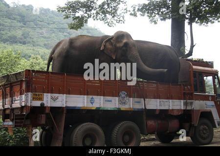 Les éléphants; fret lourd;;; Inde Kerala Thenmala Banque D'Images