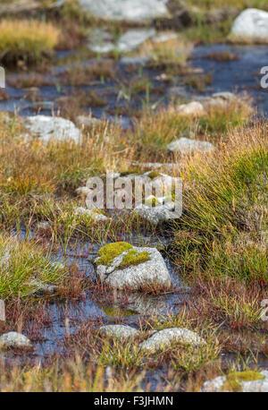 Moss couverts roche exposée en marécage sur le sommet d'Aonach Mor dans les Highlands écossais. Banque D'Images