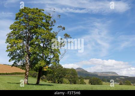 Vue de la montagne du Puy de Sancy depuis le village de Saint-nectaire en Auvergne, France