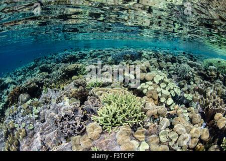 Un environnement sain et diversifié pour les récifs coralliens se développe dans le Parc National de Komodo, en Banque D'Images