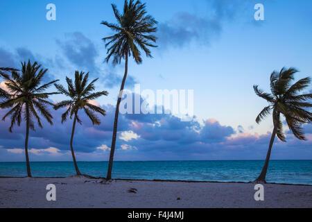 Plage de Cap Cana, Punta Cana, République dominicaine, Antilles, Caraïbes, Amérique Centrale