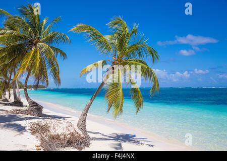 Playa Cabeza de Toro, Punta Cana, République dominicaine, Antilles, Caraïbes, Amérique Centrale Banque D'Images