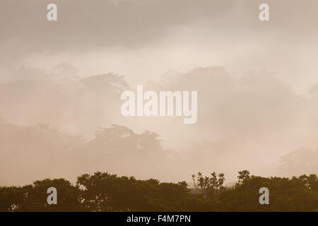 Misty rain forest au lever du soleil dans le parc national de Soberania, République du Panama. Banque D'Images
