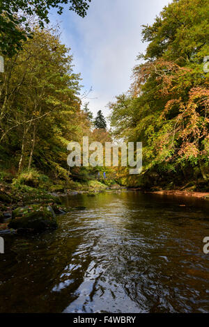 L'automne sur la rivière Allen, Northumberland