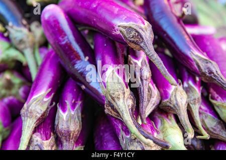 Violet aubergine brinjal longue ou la vente au marché local le dimanche. Focus sélectif avec une faible profondeur Banque D'Images