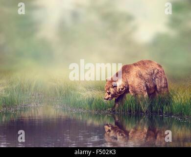 Ours brun près de l'étang avec la réflexion Banque D'Images
