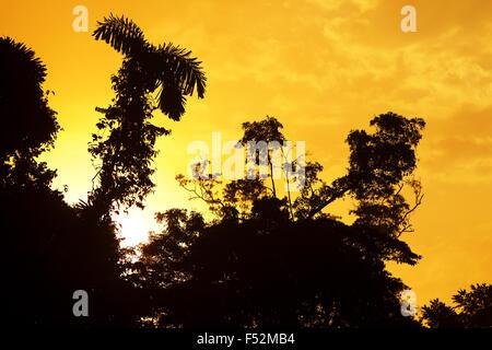 Lever du soleil sur l'Amazonie Banque D'Images